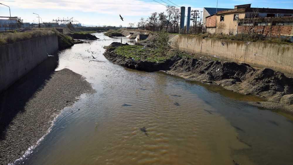 Dendropotamos_river