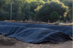 Example of covered composting piles (2)